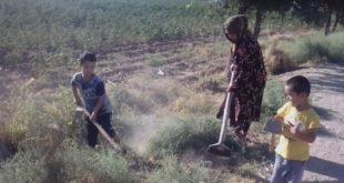 В Сурхандарье многодетные женщины вышли на принудительную уборку улиц, опасаясь лишиться детских пособий