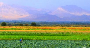 Шавкат Мирзиёев разрешил субаренду сельскохозяйственных земель