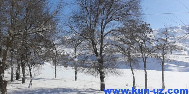 Биринчи қор 2019 йил 20-ноябр куни Ўзбекистонга келади
