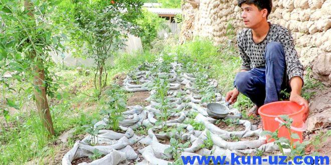 «Bir qopda 15 kg.gacha hosil olish mumkin» — qopda kartoshka etishtirayotgan andijonlik yosh tadbirkor