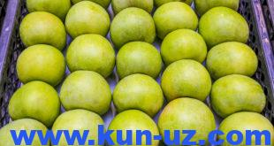Ўзбекистон олма импортини 8,5 баравар оширди, экспорт 61 фоизга тушди
